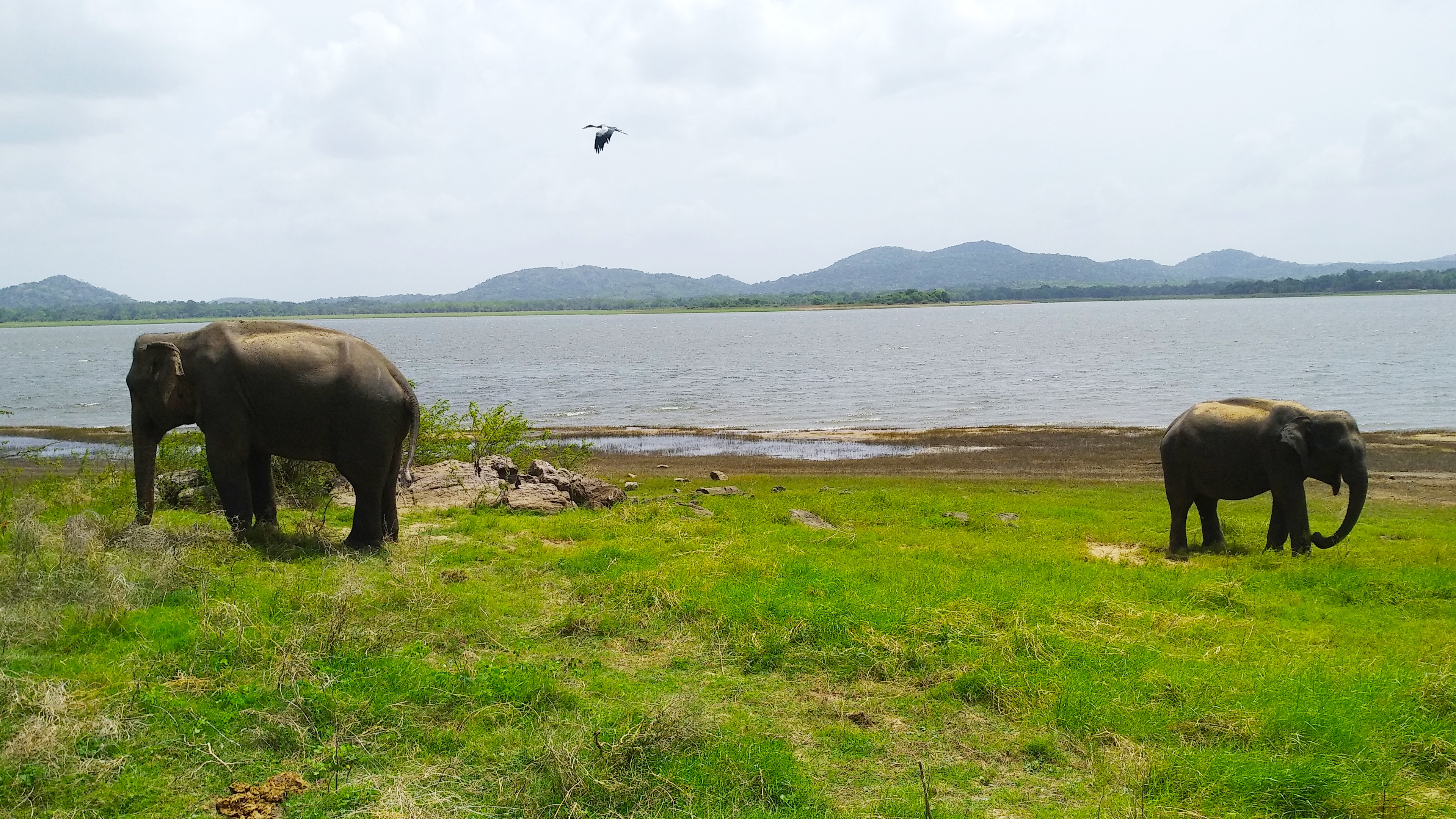 Sri Lanka - huge rock and tiny elephants #6